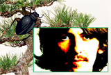 George Harrison Bark Beetle